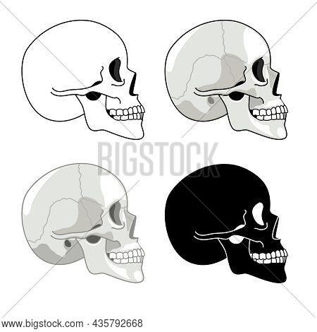 Skull Profile. Detailed Anatomy And Halftone Silhouette Skulls, Skeleton Head Side Set, Cranium Pict