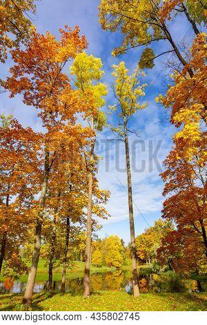 Trees In Alexander Park In Autumn, Pushkin (tsarskoe Selo), Saint Petersburg, Russia