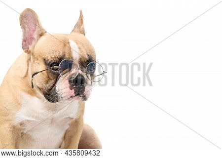 Cute French Bulldog Wear Eye Glasses Isolated On White Background, Pet And Animal Concept