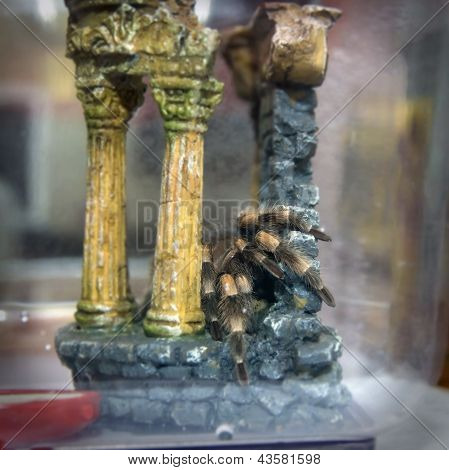 spider in the terrarium