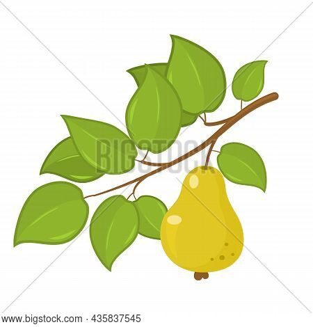Ripe Green Pear Hanging On A Tree Branch With Leaves. Vector Illustration Isolated On White Backgrou