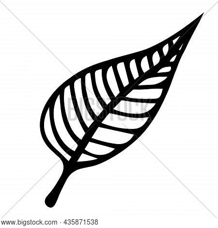 Tree Leaf With Veins Vector Icon. Hand Drawn Doodle. Birch Leaf On A Thin Stem. Botanical Sketch. Mo