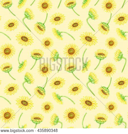 Sunflowers Seamless Pattern. Hand Painted Watercolor Farm Flowers Illustration. Yellow Flower Heads