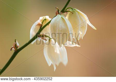 Vigorous White Flower In The Morning Light