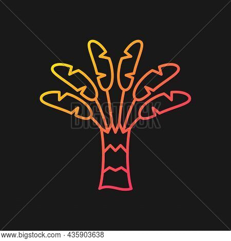 Traveller Palm Gradient Vector Icon For Dark Theme. Tropical Outdoor Plant. Traveler Tree. Ravenala