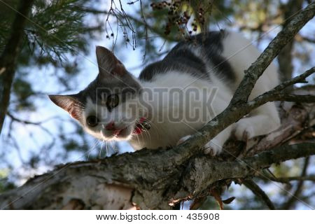 poster of young cat climbing down branch of tree