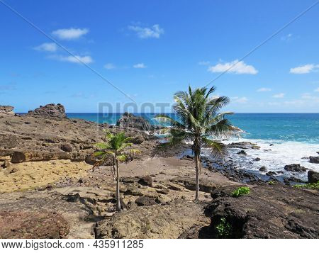Caribbean Coast With Turquoise Waters Under Tropical Blue Sky. West Indies. French West Indies Lands