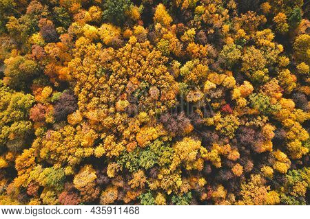 Beautiful Aerial Fall Trees. Top Down View On Autumn Deciduous Forest In Yellow And Orange Colors. A