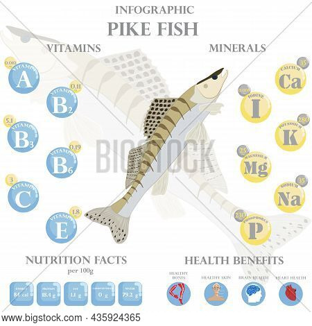 Pike Fish Nutrition Facts And Health Benefits Infographic On The White Background. Vector Illustrati