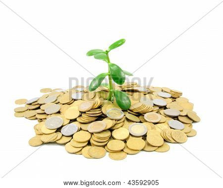 Plant Growing Out Of Gold Coins Isolated On White Background