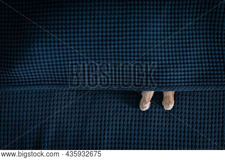 The Cat Sleeps Under The Blanket And The Paws Stick Out, The Blanket Is Blue, Geometric, The Cat Is