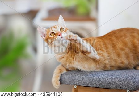 Playful  Orange Cat Lying Comfortable On The Armchair In A Household. Selective Focus, Copy Space