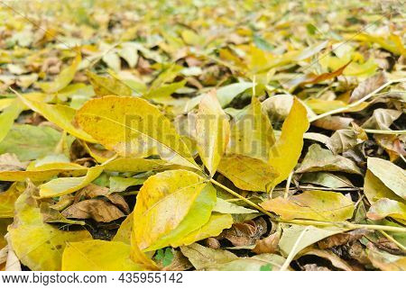 Yellow Autumn Leaves Lie On The Ground. Autumn Background