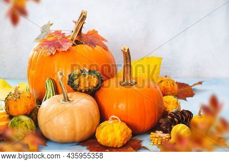 Pumpkins And Squashes. Various Types And Sizes Pumpkins In Autumn Composition. Can Be Used For Hallo