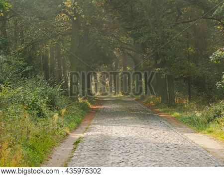 Cobbled, Basalt, Black Road Through The Forest. Sunny Autumn Morning. Fog Lit By The Sun Rises Betwe