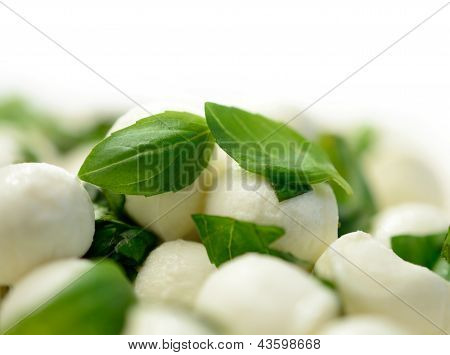Mozzarella Balls & Basil Leaves