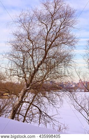 Winter Morning On The Ob. A Bare Tree Leans Towards An Ice-covered River In Novosibirsk