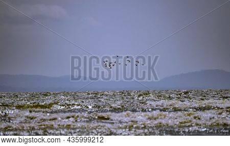 Birds Flying Over Water, Low Angle Of Birds Flying Over Water, Birds Over Water With Clear Sky