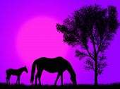Horse and colt pasturing against a colorful sunset poster