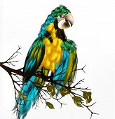 vector background with realistic parrot Ara bird sit on branch poster