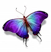 Blue violet butterfly isolated on white background poster