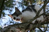 young cat climbing down branch of tree poster