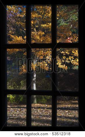 Fall colors through window