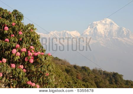 Himalaya View In Nepal Annapurna