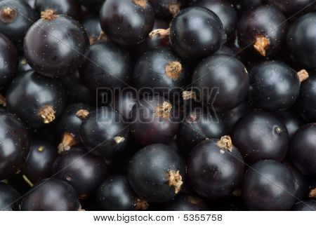 Black Currants Closeup