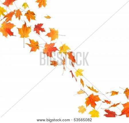 Autumn Leaf Swirl