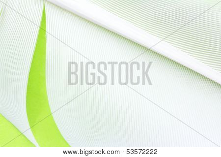 Swan Feather Texture Background