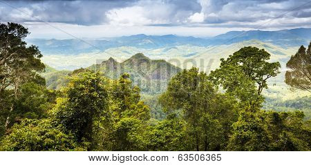 Queensland rainforest in the Gold Coast hinterland near Mount Warning poster