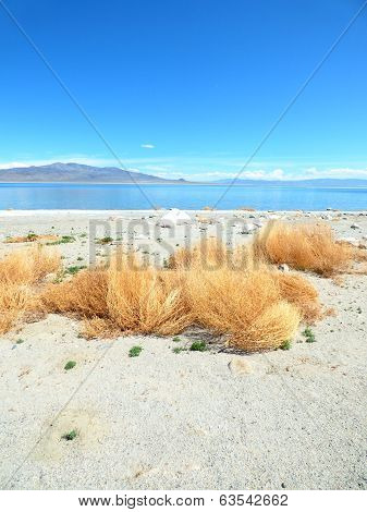 Golden Tumbleweeds White Sand Blue Water and Sky