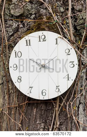 clock hung on a tree