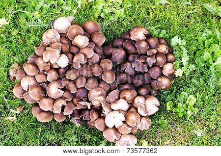 Heart Of Mushrooms