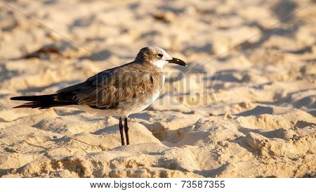 Lonely Seagull On Sandy Beach
