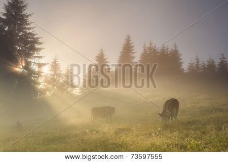 Beautiful misty landscape in the mountains. Ukraine. Carpathians. poster