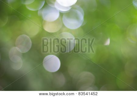 Nature Background Defocused