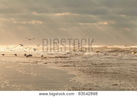 Seagull Birds Over Sea Waves At Sunset