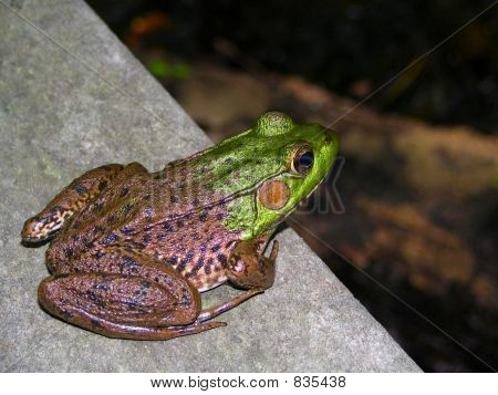 frogright
