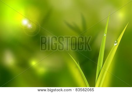 Abstract Natural Background With Grass And Waterdrops