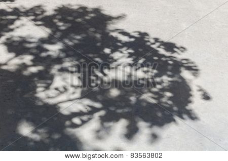 Tree Shadow On The Concrete Floor