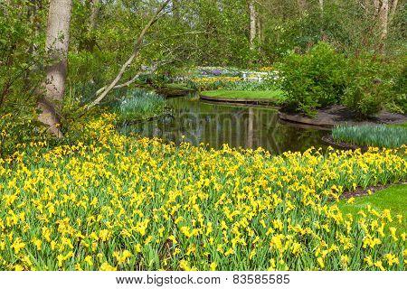 Spring Flowers in dutch Spring Garden Keukenhof
