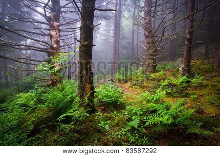 Scenic Forest Hiking Appalachian Trail North Carolina Nature Landscape