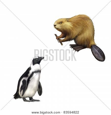 gentoo penguin, Beaver gnawing on tree. North American Beaver, Illustration isolated on white backgr
