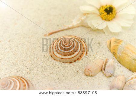 Seashells On White Sand