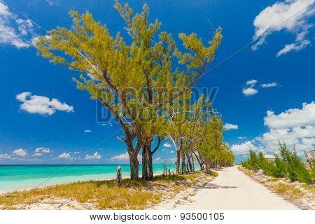 Sandy pathway separated by trees from a beautiful beach in Bahamas poster