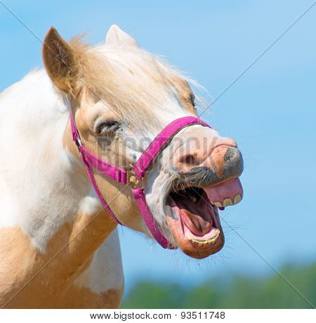 Portrait Of Neighing Horse With Bridle.