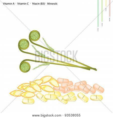 Ostrich Fern With Vitamin A, Vitamin C And Vitamin B3