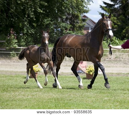 Mare And Foal Auction